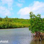 西表島の川イメージ